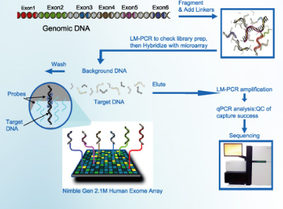 Exome Sequencing4.png